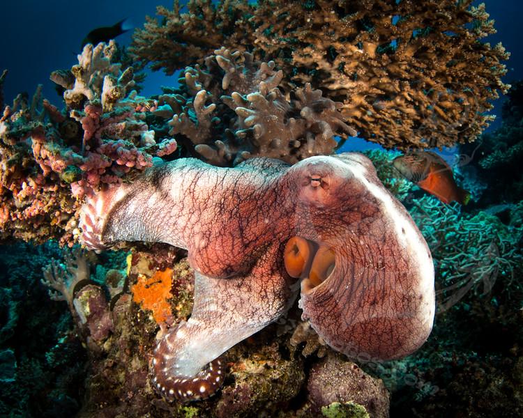octopus.jpg