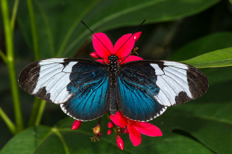Butterfly Wonderland 7.jpg