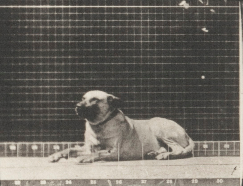 Dog Smith aroused by a torpedo