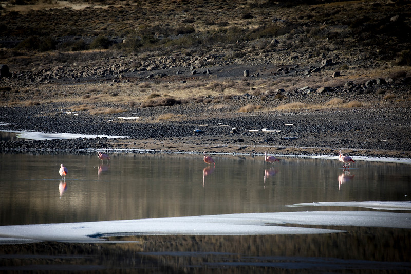 Flamingos outside TdP-3.jpg