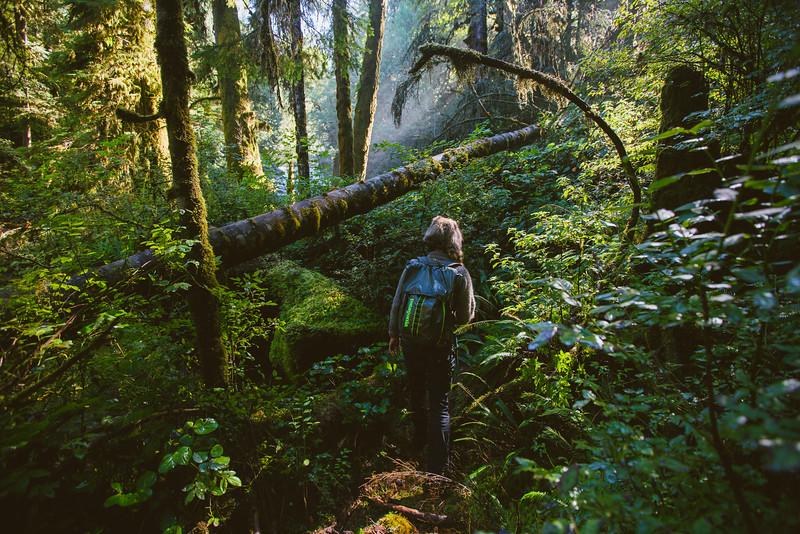 150910_GrizzlyForest_4037.jpg