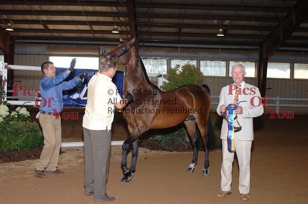 CLASS 012 Champion Stallion