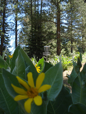 Disc Golf Truckee 06-10-2014