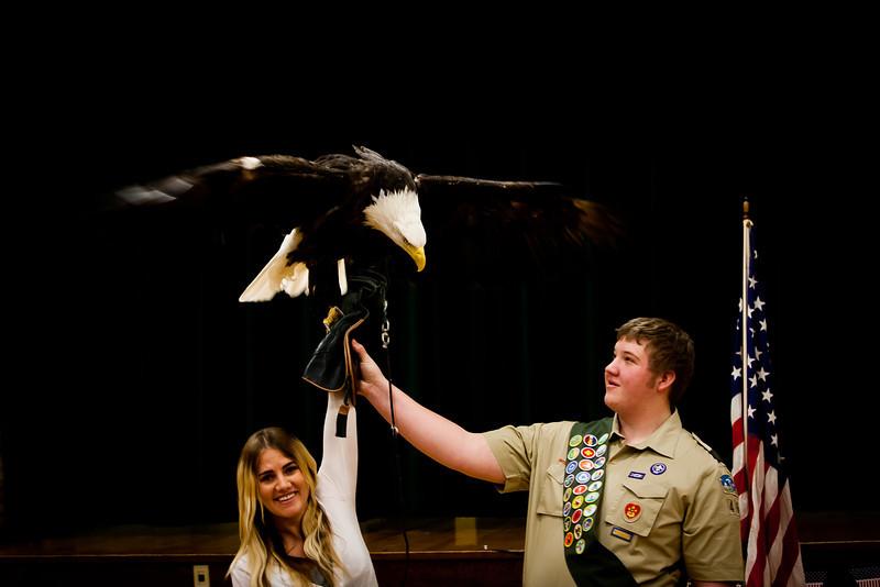 martin eagle-37.jpg