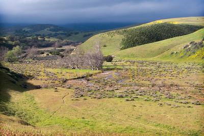 Cuyama Oaks XP 2011