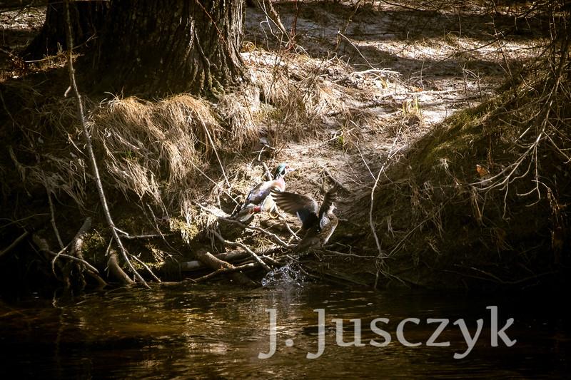 Jusczyk2021-5862.jpg