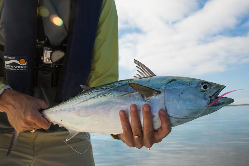 flyfishingnewengland.westportfall15-26.jpg