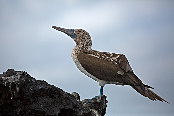 Galapagos January 2016