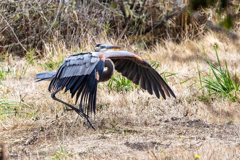 Heron's Yoga, October 28, 2018