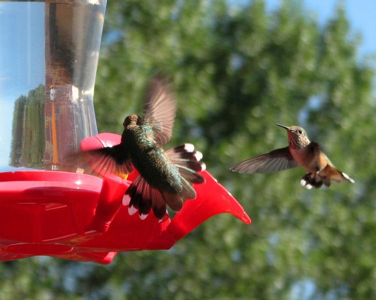 birds (160).jpg