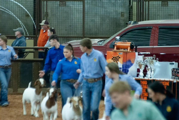 OYE Doe Showmanship and Wether Dam Show