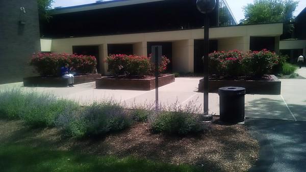 71 hanover Rd, Rear Plaza photos , June 3 2015,  Installed July 2016, follow up photos July 2017