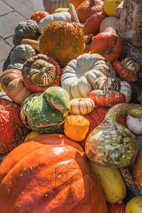 Cluster of colorful red, green and white gourds