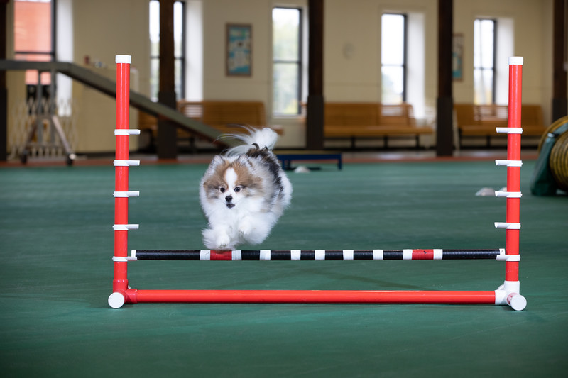 SPCA_Agility-13.jpg