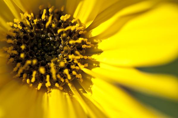 Marguerite s'habille en jaune