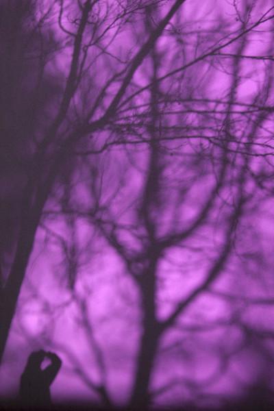 0659 Shadows in Purple.jpg