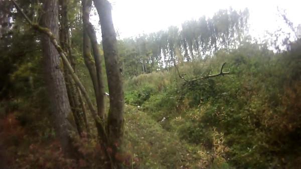 de vettigen bos