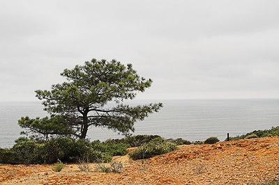 2006-06-08 Torrey Pines