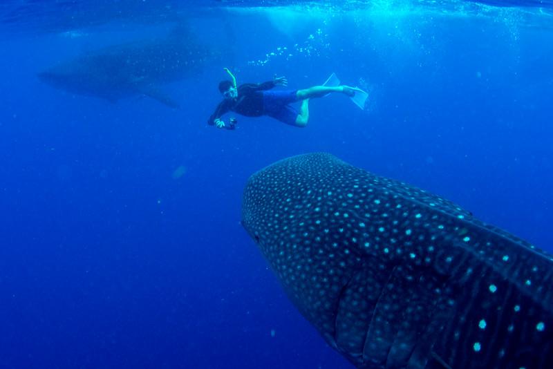 2014 Whale Shark - Cave Adventure-30.jpg