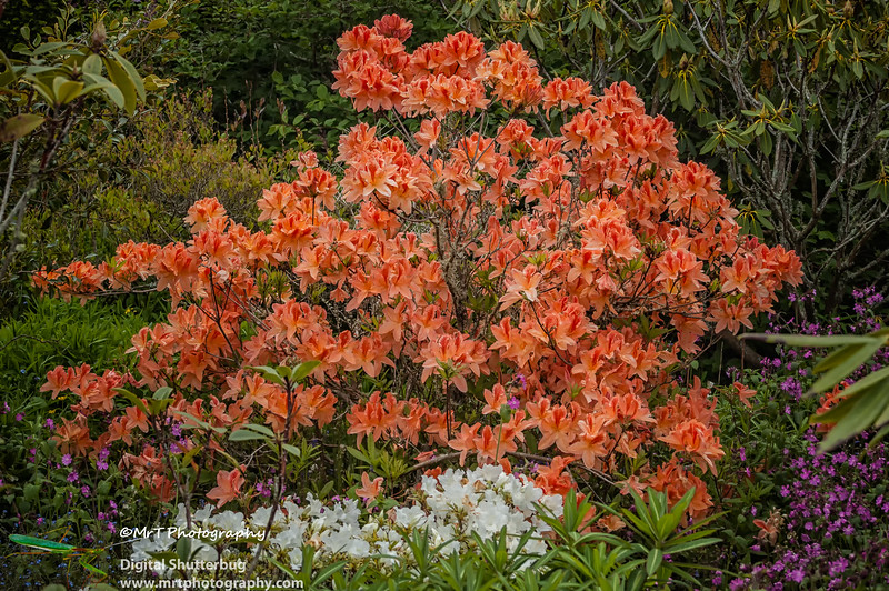 20061028_hollard_garden_0102-Edit.jpg