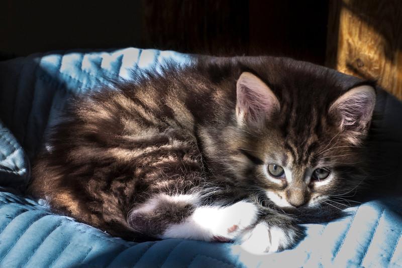 Kittens234.jpg