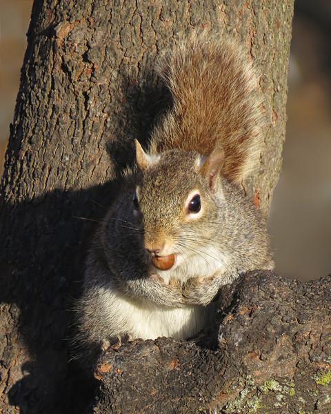 sx50_squirrel_192.jpg