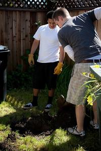 Planting Cooper's Tree