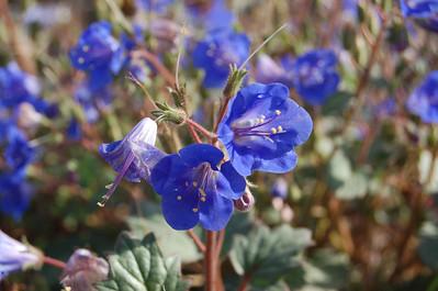 2012, Spring at the Desert Botanical Garden