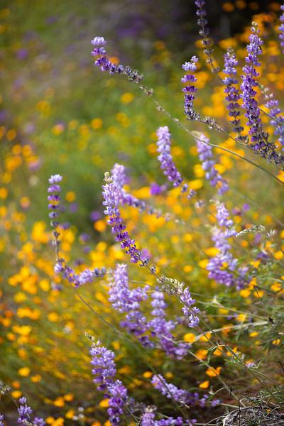 Spring Flowers B-143.jpg