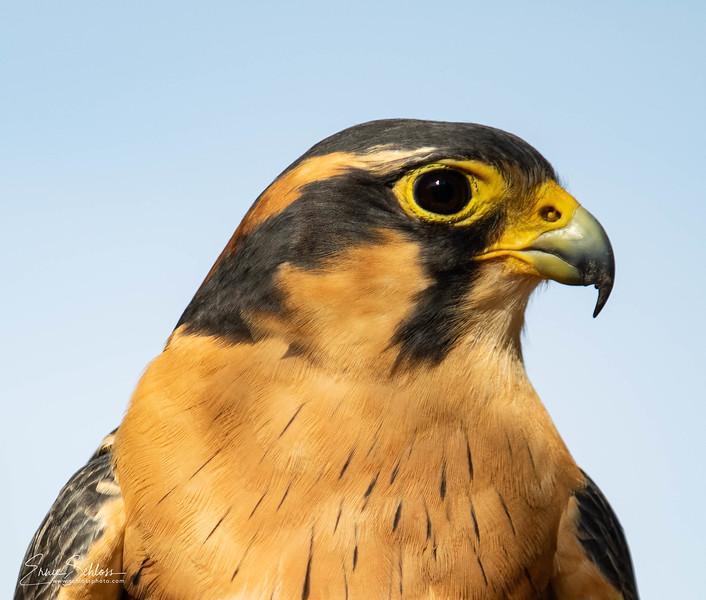 Audubon 8-121-2918f-8909.jpg