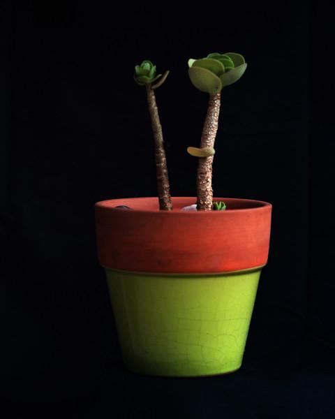 succulent 062720-.jpg