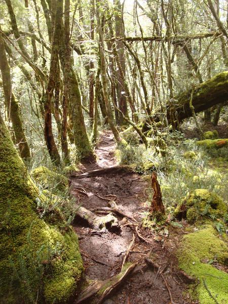 Falls trail.JPG