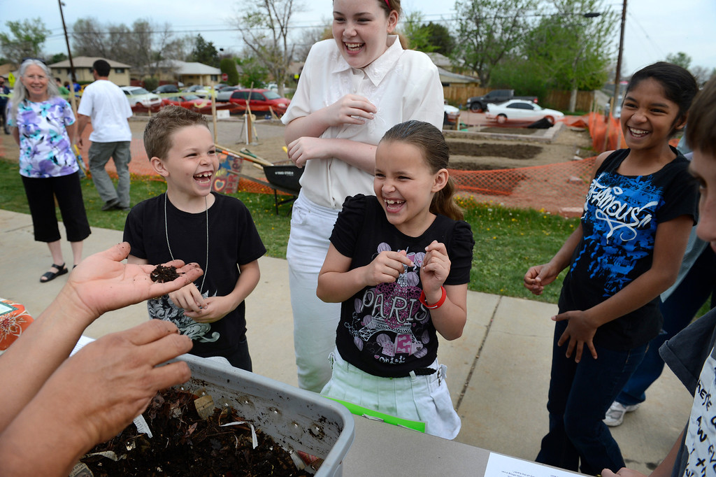 ". AURORA, CO. - MAY 18: (l-r) Saiah Brydon, 8, and his sisters, Sierra, 12, and Serenity, 8, react while learning about compost during the North Middle School Garden Festival in Aurora, CO May 18, 2013. The youths had just been informed that the worm castings they were smelling is also called ""worm poop.\""  The celebration marked the opening of the first school-based community garden in Aurora Public Schools. The project, funded by The Piton Foundation, was made possible through a partnership of Aurora Public Schools, Denver Urban Gardens (DUG), and Anschutz Medical Campus Department of Family Medicine and BRANCH, a multi-disciplinary student organization from the medical campus. A second garden is scheduled to open later this year at Hinkley High School. (Photo By Craig F. Walker/The Denver Post)"