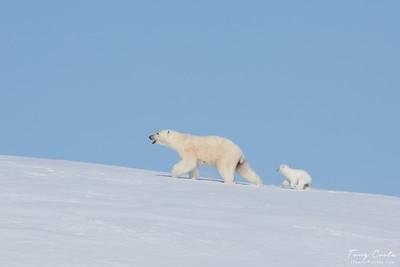 2018 Baffin Island