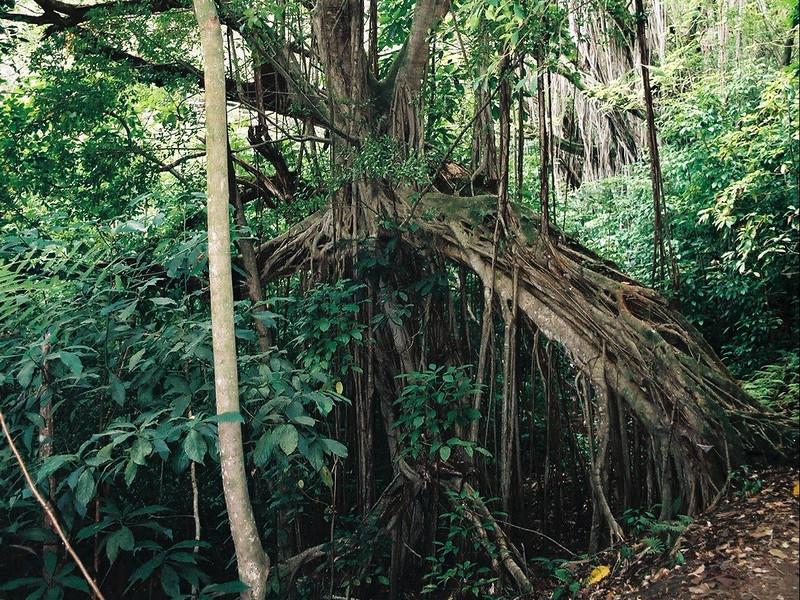Hawaii-702.jpg