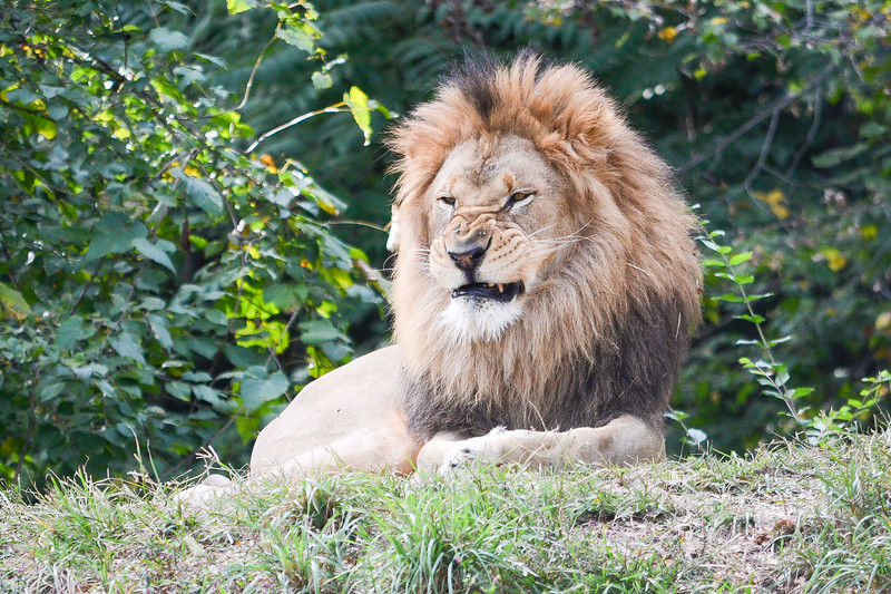 Lionsec3-0590.jpg