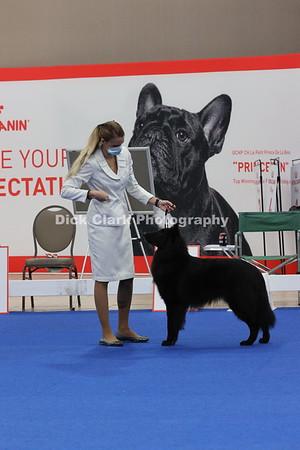 Dogs - Winners Dog