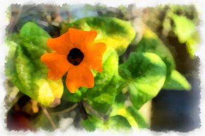 13 fleurs