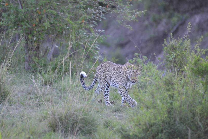 East Africa Safari 172.jpg