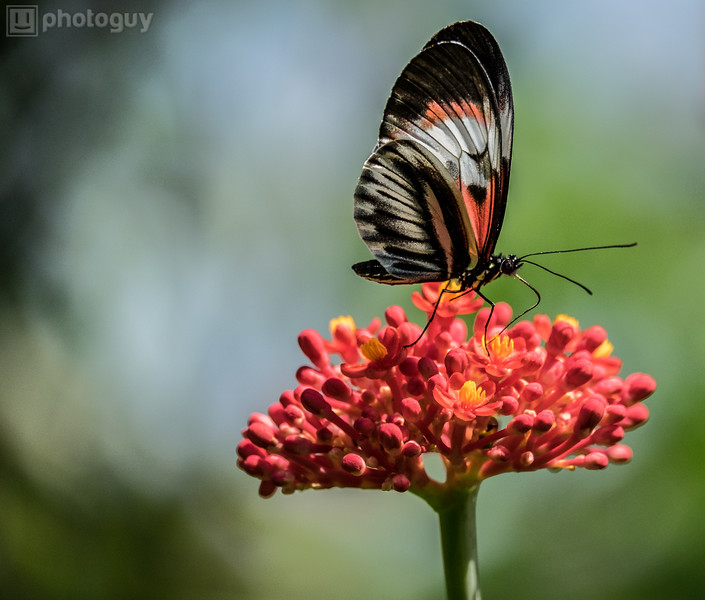20140628_BUTTERFLY_WORLD (9 of 28)