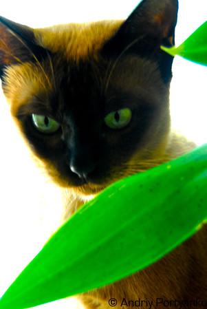 CatGreen.jpg