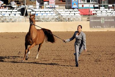 Scottsdale Arabian Horse Show 2011