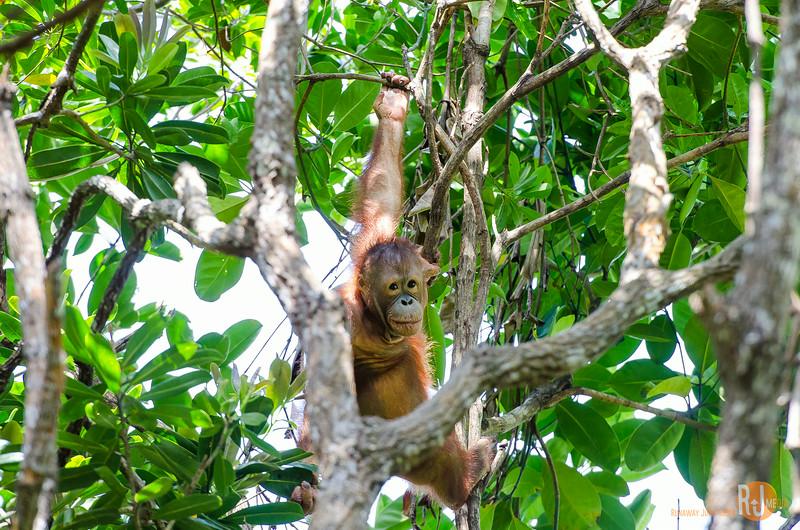 Malaysia-Rasa Ria Shangri La-Kota Kinabalu-7345.jpg