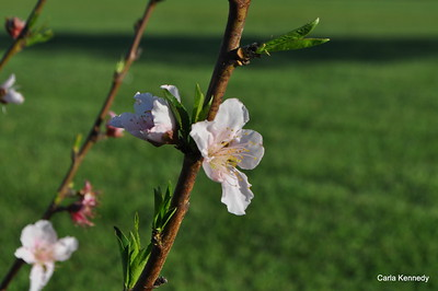 2015 03-28 flowers