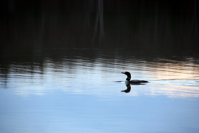 first_loon_2009_highres
