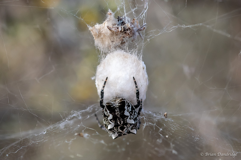 What a Web We Weave-1.jpg