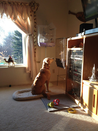 2012-11-28 Comfort Dog in Training Rachel meets Comfort Dog Faith and Linda Todd in MI