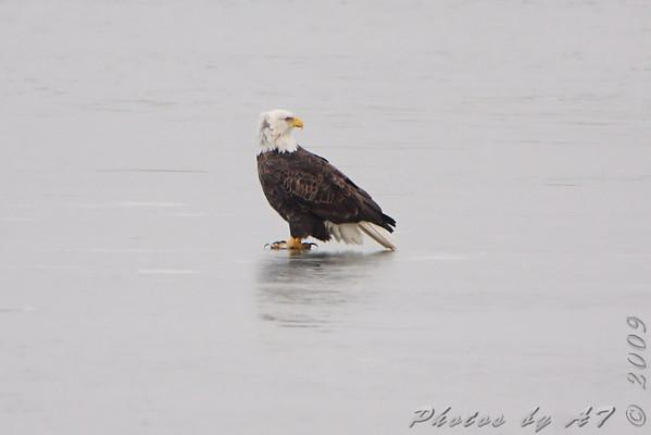 2009-12-18 Riverlands Migratory Bird Sanctuary
