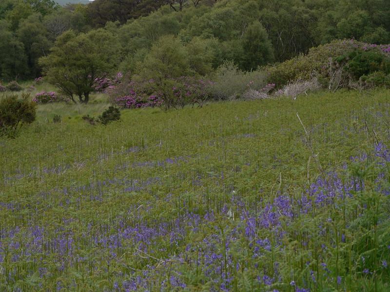 @RobAng Juni 2015 / Gruline, Oban South and the Isles Ward, Scotland, GBR, Großbritannien, 9 m ü/M, 2015/06/17 18:37:36