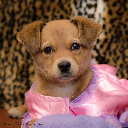 animals puppy penny 2-22-2017